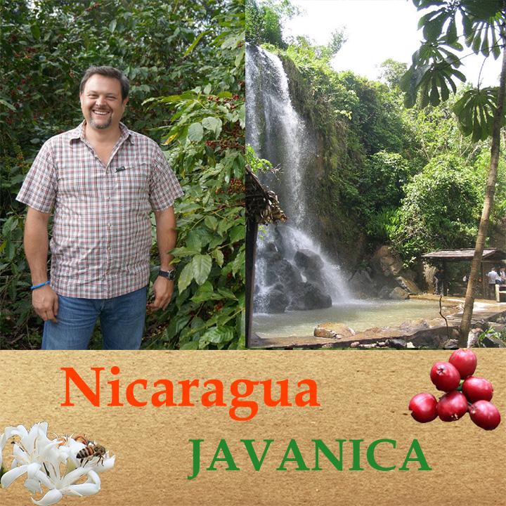 ニカラグア ジャバニカ