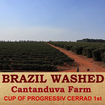 ブラジル2018 Cup of Progressive Cerrad ナチュラル