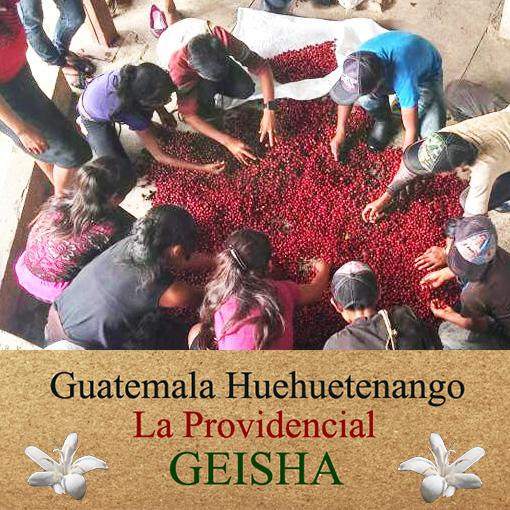 グァテマラ・ゲイシャ / ラ プロヴィデンシア農園