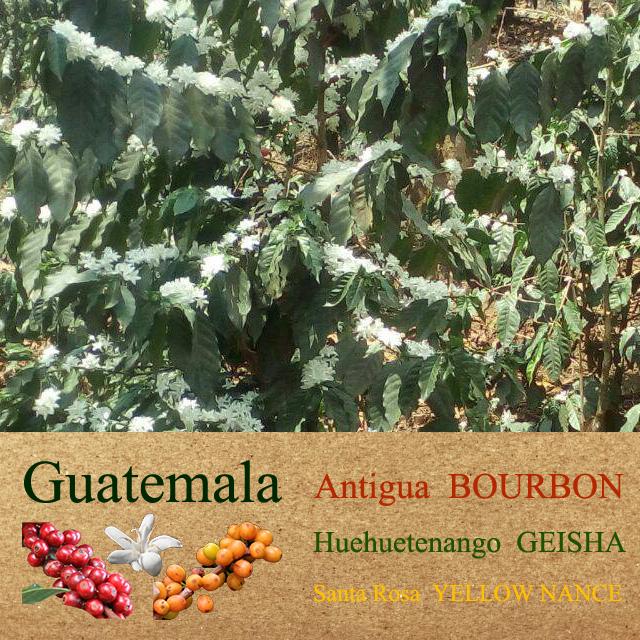 グァテマラ3種飲み比べセット