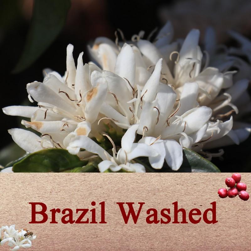 ブラジル・ウォッシュト